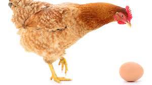 hona og egget 001
