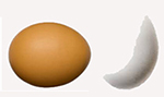 brown and part white egg 150x80