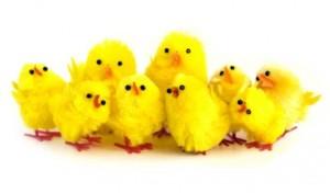 shutterstock klump kyllinger